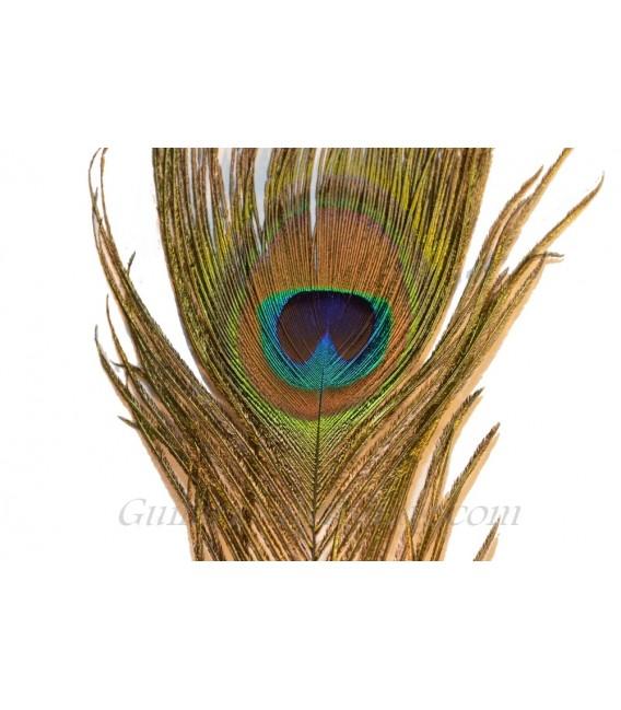 Oeil de paon